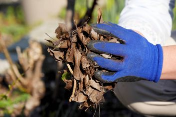 Gardener-picking-up-leaves-wearing-re-inforced-gardening-gloves