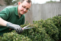 trimming-hedge-using-sheers